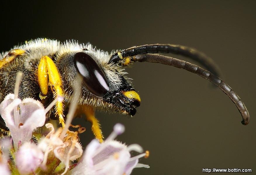 Wasp Portrait